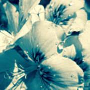 Blue Summer Flower Poster