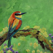 Blue Tailed Bee Eater Poster