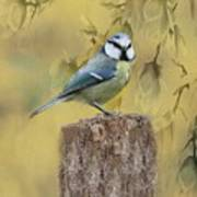 Blue Tit Bird II Poster