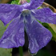 Blue Violet Raindrops Poster