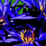 Blue Water Lily Iv Poster