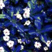 Blue White I Poster