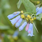 Blue Wild Flower Poster