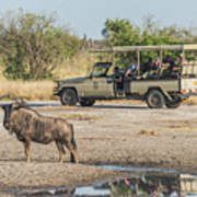 Blue Wildebeest Beside Puddle With Jeep Behind Poster