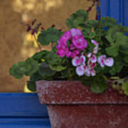 Blue Window With Geraniums Poster