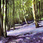 Bluebells At Grimescar Wood Poster