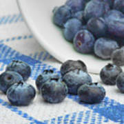 Blueberry - Still Life Poster