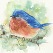 Bluebird On Twig Poster