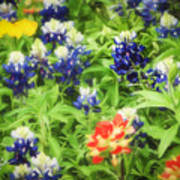 Bluebonnet Bouquet Poster