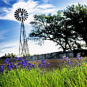 Bluebonnets With Windmill Poster