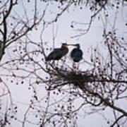 Blueherron Mating Time Poster