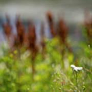 Bluff Lake Ca Wild Flowers 1 Poster