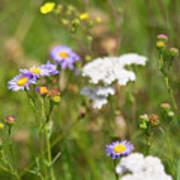 Bluff Lake Ca Wild Flowers 6 Poster