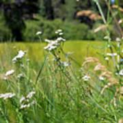Bluff Lake Wild Flowers 1 Poster