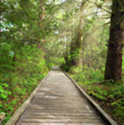 Boardwalk Along Hiking Trail At Fort Clatsop Poster