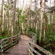 Boardwalk Through Corkscrew Swamp Poster