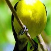 Boastful Bird Poster