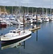 Boats At Friday Harbor Poster