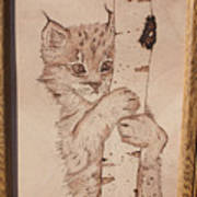 Bobcat Kitten Curiosity Poster