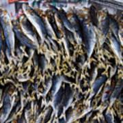 Bodboron Filipino Dried Fish Poster