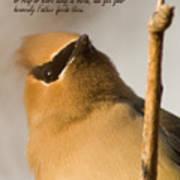 Bohemian Waxwing Poster
