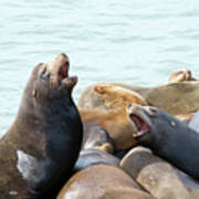 Boisterous Pinnipeds Poster