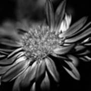 Bold Black And White Flower Poster