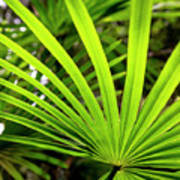 Bold Fronds 0 Poster