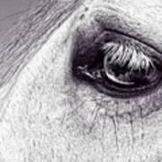 Bonbon's Eye Poster
