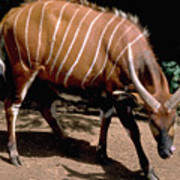 Bongo In Kenya Poster