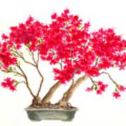 Bonsai Tree - Kurume Azalea Poster