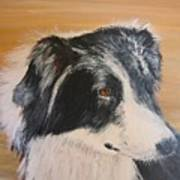Border Collie Study Poster