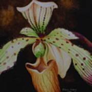 Borneo Orchid P Lebaudyanum Poster