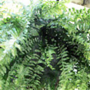 Boston Fern With Visitor Poster
