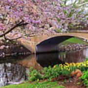 Boston Ma Spring Tree On The Charles River Esplanade Boston Ma Poster
