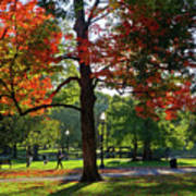 Boston Public Garden Autumn Tree Morning Light Walk In The Park Poster