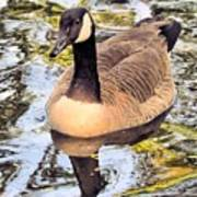 Boston Public Garden Goose Poster