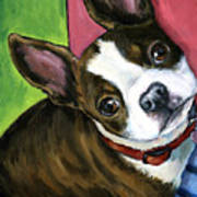 Boston Terrier Looking Up Poster
