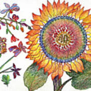 Botanical Flower-46 Sunflower Drawing Poster