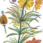 Botanical Flower-53  yellow flower Poster