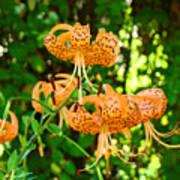 Botanical Master Gardens Art Prints Orange Tiger Lilies Baslee Troutman Poster