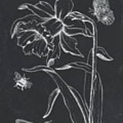 Botanique 2 Poster
