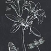 Botanique 3 Poster