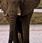 Botswana Poster
