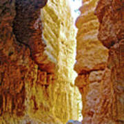 Bottom Of Wall Street On Navajo Trail In  Bryce Canyon National Park, Utah  Poster
