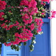 Bougainvillea And Blue Poster