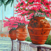 Bougainvillea Pots Poster