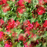 Bougainvillea Repeating Pattern Abstract I Poster