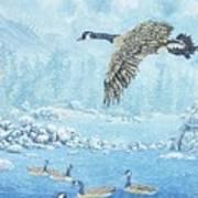 Boulder Bay Geese Poster