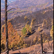 Boulder County Wildfire 5 Miles West Of Downtown Boulder Poster